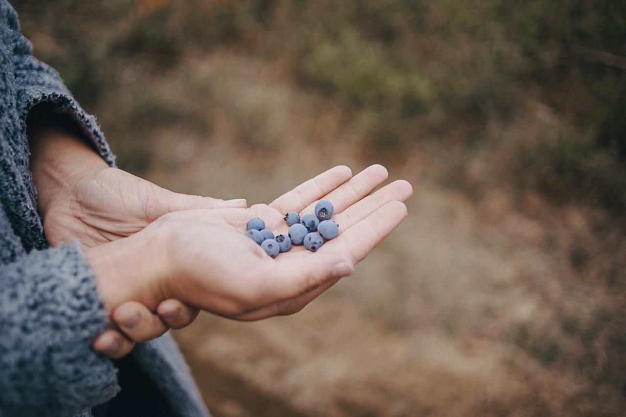 Bleuets, organic, natural, field, bio, biologique
