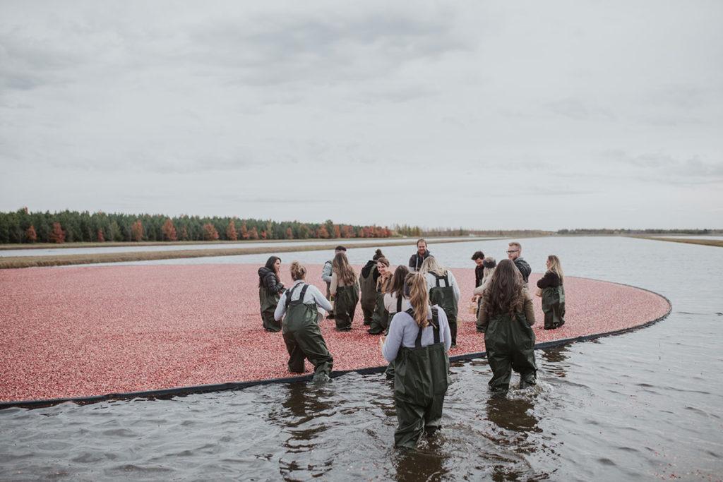 recolte_harvest_canneberges_cranberries_gratitude_pamela_lajeunesse