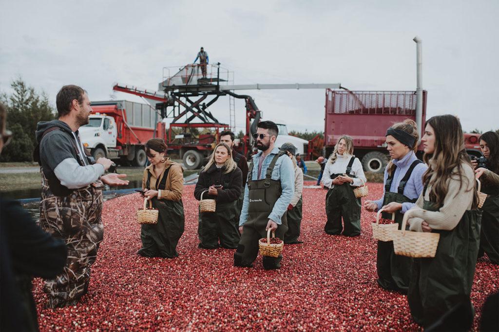 recolte_harvest_canneberges_cranberries_gratitude_simon_pamela_lajeunesse