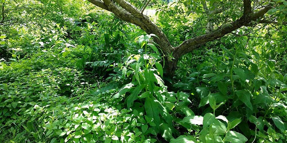 foret-nourricière-edible-garden-forest-wen-rolland2